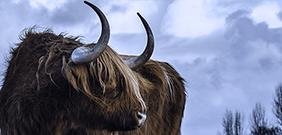 Stier steigende Heizölpreise